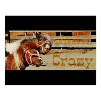 Funny Horses Crazy Postcard