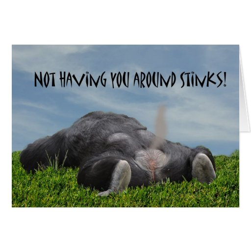 Funny Humorous Monkey Miss You Greeting Cards