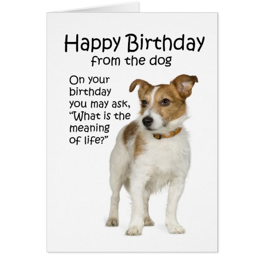 Funny Jack Russell Terrier Birthday Card