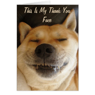 funny japanese akita with cute smile thank you
