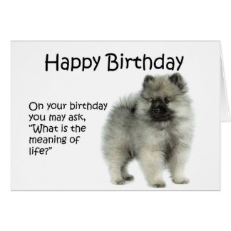 Funny Keeshond Puppy Birthday Card