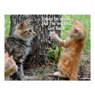 Funny Kitten Cat I May Be Short...Design Poster