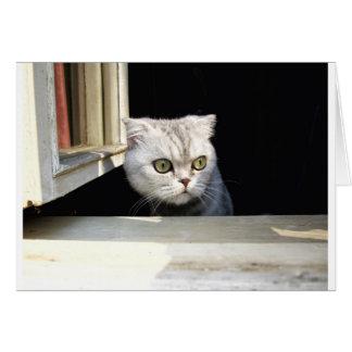 Funny Kitten Greeting Card