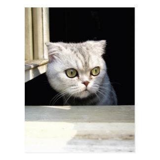 Funny Kitten Postcard