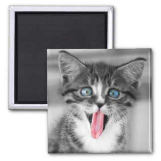 Funny Kitten With Tongue Hanging Out Magnet