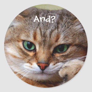 Funny Kitty Stickers