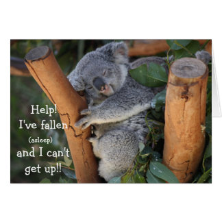 Funny Koala Bear Belated Birthday Card