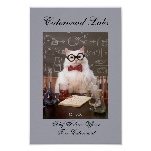 Funny Lab Cat CFO or Chief Feline Officer Picture Poster