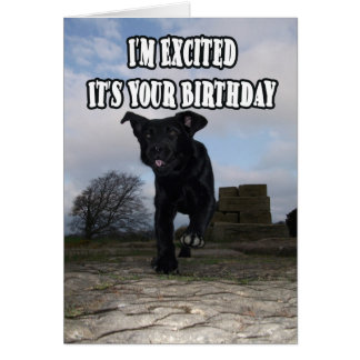 Funny Labrador Dog Excited Birthday Greeting Card
