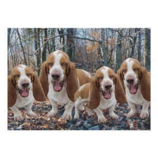Funny Laughing Basset Hounds Poster
