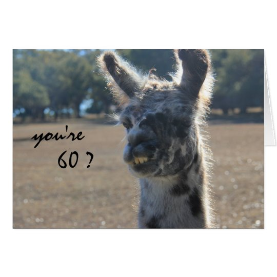 Funny Llama Birthday, 60th, Over the Hill Card