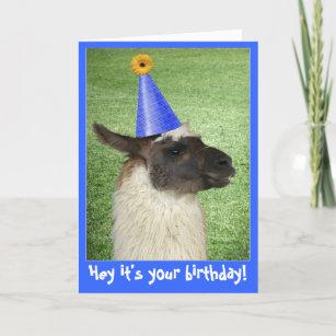 Funny Llama Birthday Card Or Invitation