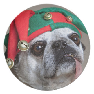 Funny looking pug with tongue hanging out plates