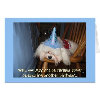 Funny Maltese Birthday Card