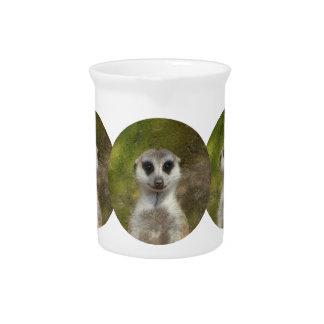 Funny Meerkat 002 02.3_rd Pitcher