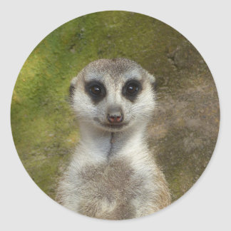 Funny Meerkat 002 02_rd Classic Round Sticker