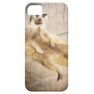 Funny Meerkat Sitting Grunge Effect Photo iPhone 5 Cover