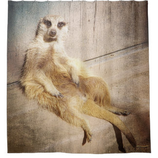 Funny Meerkat Sitting Grunge Effect Photo Shower Curtain
