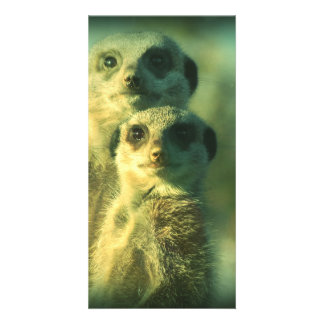 Funny meerkats picture card