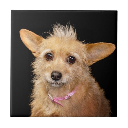Funny Mohawk Dog Small Square Tile