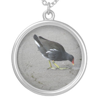 Funny Moorhen Take a Bow Necklace