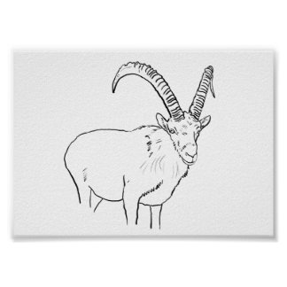 Funny Mountain Goat Line Drawing Animal Art Design Poster