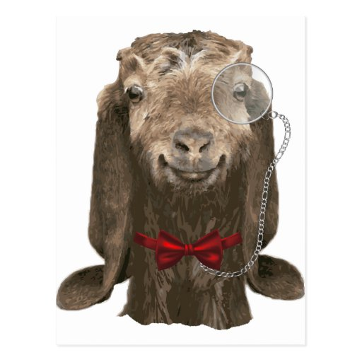 Funny Nubian Goat With Monocle Post Cards