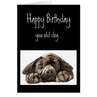 Funny Old Dog Birthday, Labrador Retriever Card