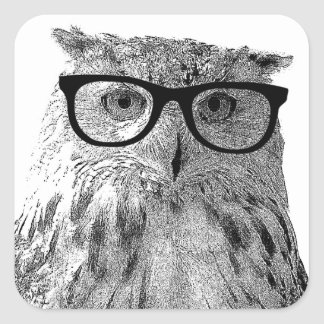 Funny owl stickers   Bird wearing glasses