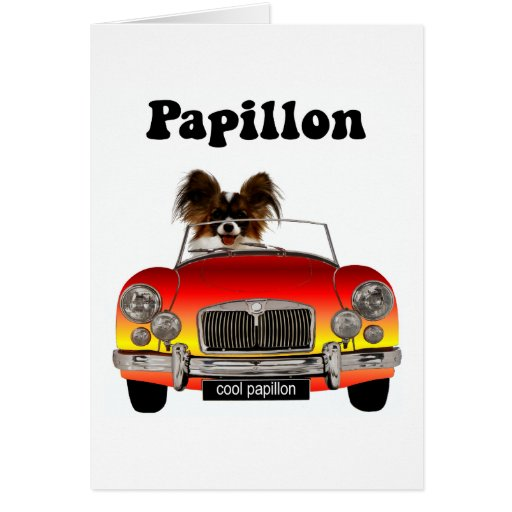 Funny Papillon Cards