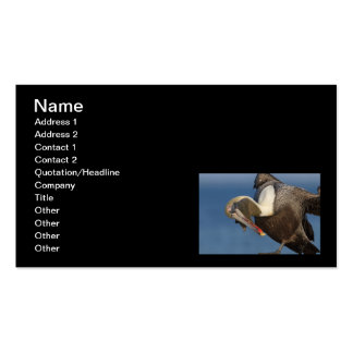 Funny Pelican Pack Of Standard Business Cards