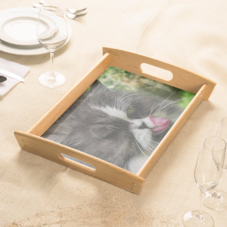funny persian cat, kitchen, tray, kitchen serving tray