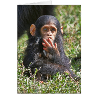 funny picture of young chimpanzee card