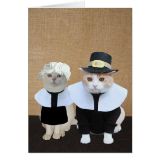 Funny Pilgrim Cats Thanksgiving Card