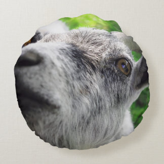 Funny pillow with photo of curious goat
