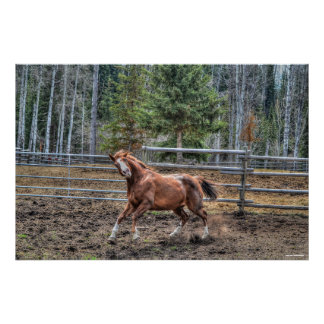 Funny, Playful Chestnut Ranch Horse Equine Photo Posters
