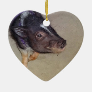 Funny Pot Bellied Pig Photography Christmas Tree Ornament