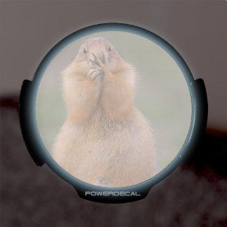 funny prairie dog LED window decal