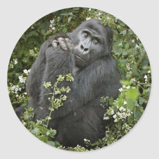 funny praying mountain gorilla :-) round stickers