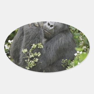 funny praying mountain gorilla :-) oval sticker