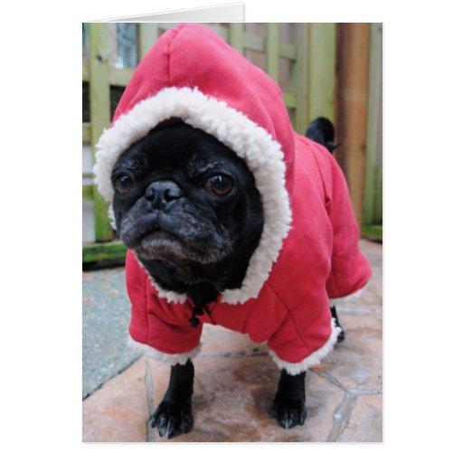 Funny Pug Birthday Greeting Card