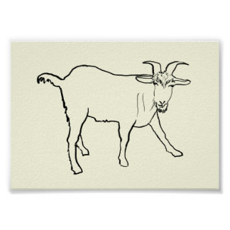 Funny Quizzical Goat Drawing Animal Art Design Poster