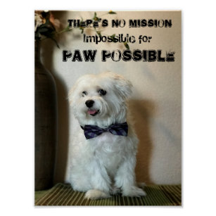 funny dog picture posters prints zazzle uk
