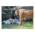 Funny Retirement Card, sleeping tiger Card