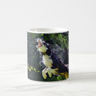 Funny scary border collie leaping coffee mug