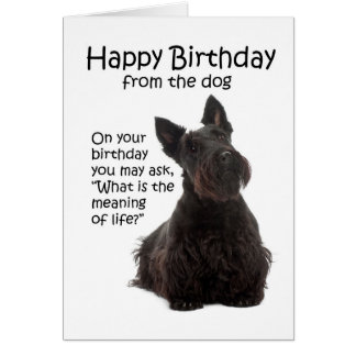 Funny Scottie Birthday Card