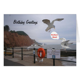 Funny seagull birthday card, customizable greeting card