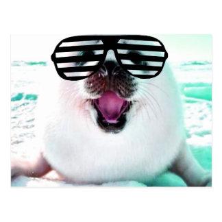 Funny seal postcard
