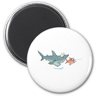 funny shark chasing fish 6 cm round magnet