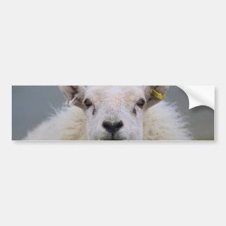 Funny Sheep Picture Bumper Sticker
